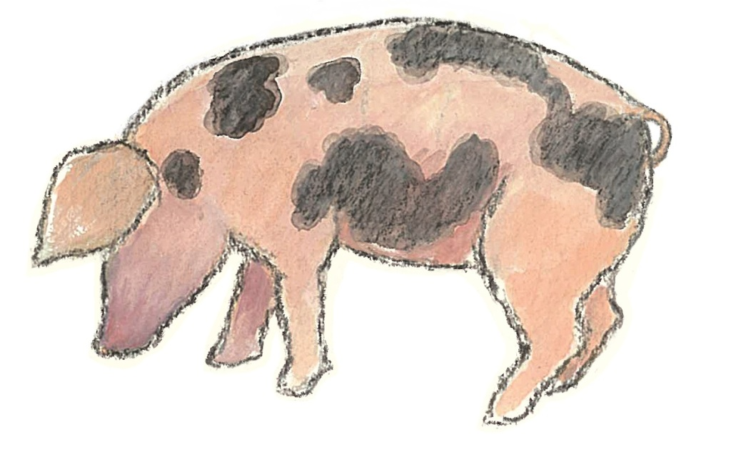 This image has an empty alt attribute; its file name is pig-2.jpg